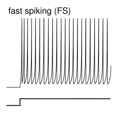 Priebeh potenciálu na reálnom neuróne typu Fast spiking