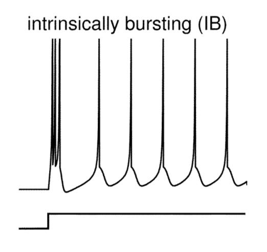Priebeh potenciálu na reálnom neuróne typu Intrinsically bursting