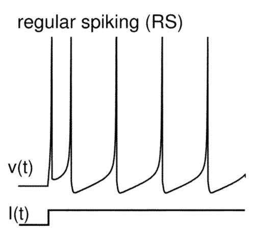 Priebeh potenciálu na reálnom neuróne typu Regular spiking